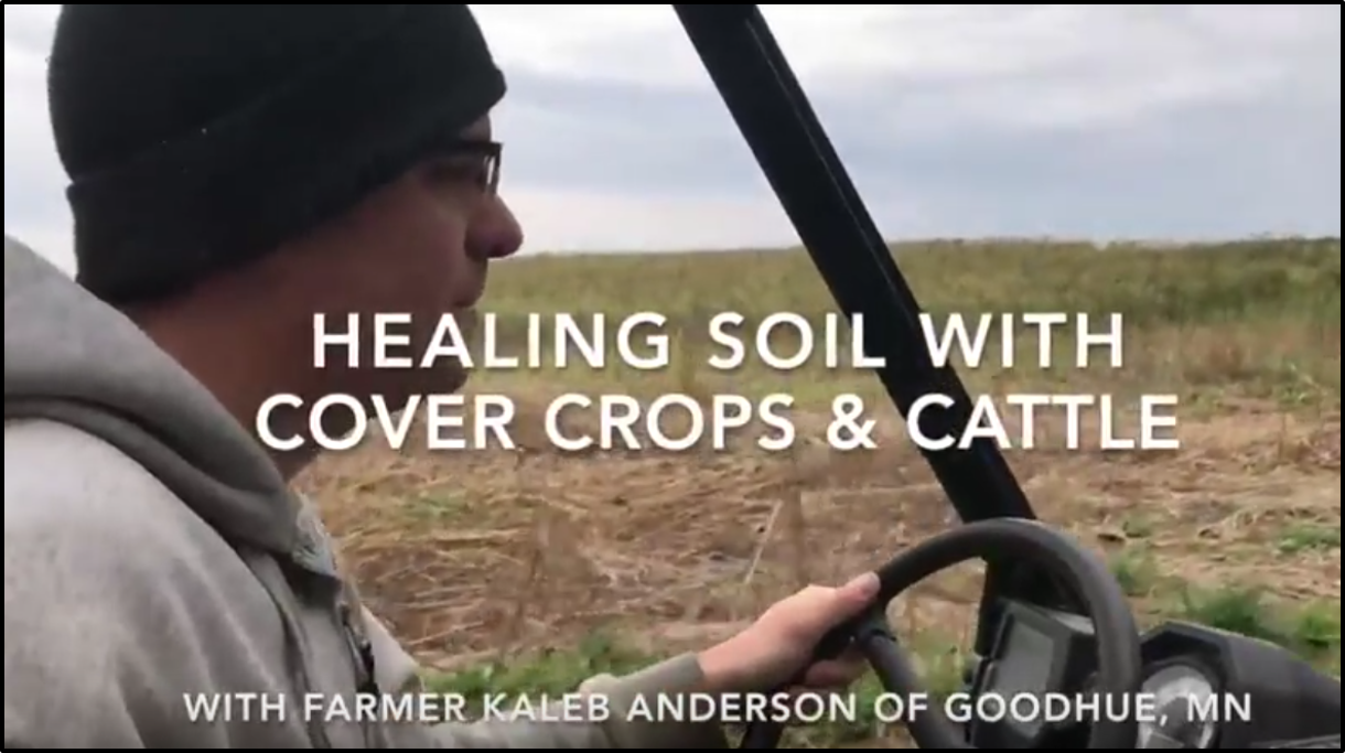 YouTube video of Using cattle and cover crops to create cash and healthy soil from Land Stewardship Project