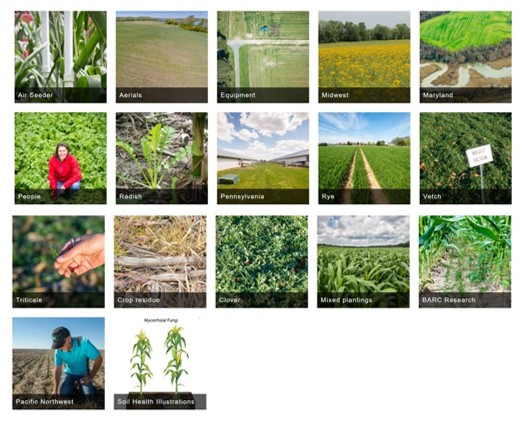SARE Cover Crop Image Library