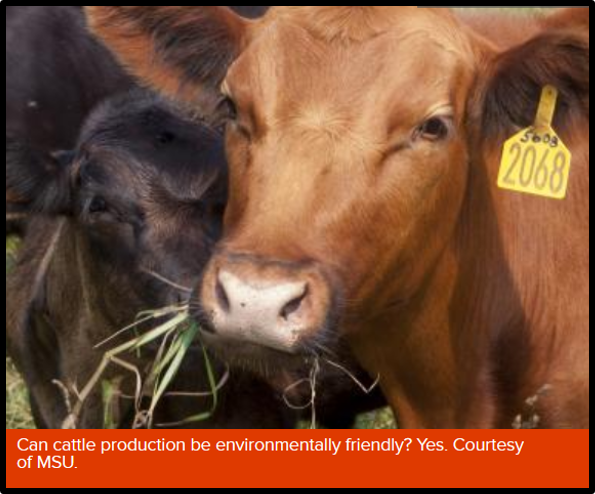 Cow image from Michigan State University article on environmentally friendly cattle production