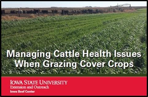 Managing Cattle Health when Grazing Cover Crops Iowa State Univ fact sheet