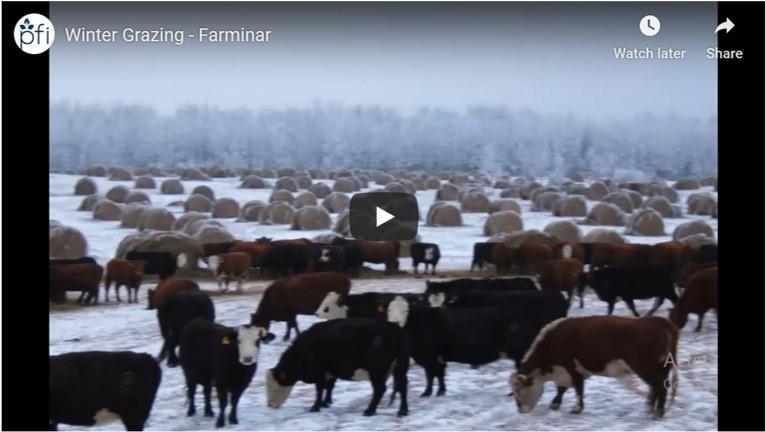 Practical Farmers of Iowa Winter Grazing farminar
